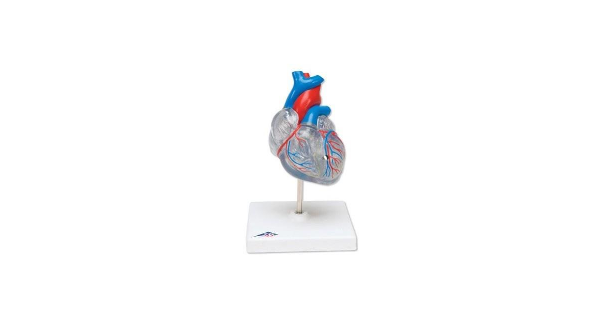 Πρόπλασμα καρδιάς  -Συσκευές λεμφοιδήματος - Πελματογράφος -Προπλάσματα