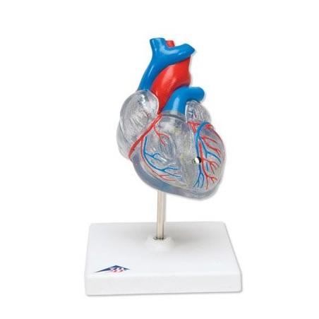 Πρόπλασμα καρδιάς